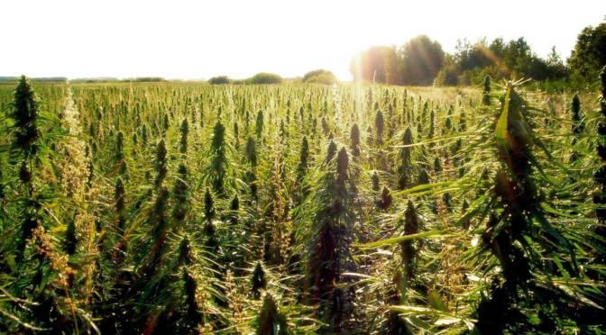 Declaration on Seed Freedom