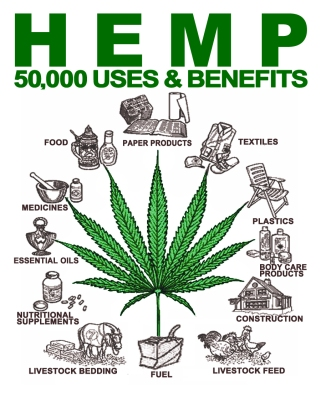 Image result for hemp images